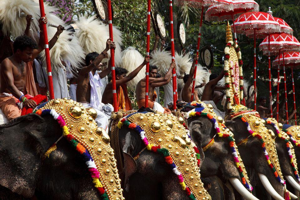 Pasar tiempo con Temple elefantes