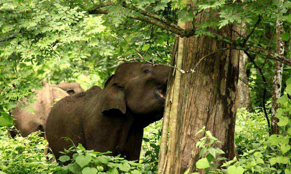 Fauna y naturaleza de Kerala