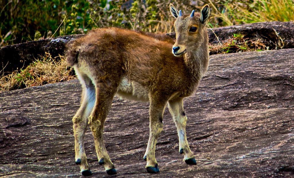 Spot la vida silvestre y disfrutar de lugares naturales