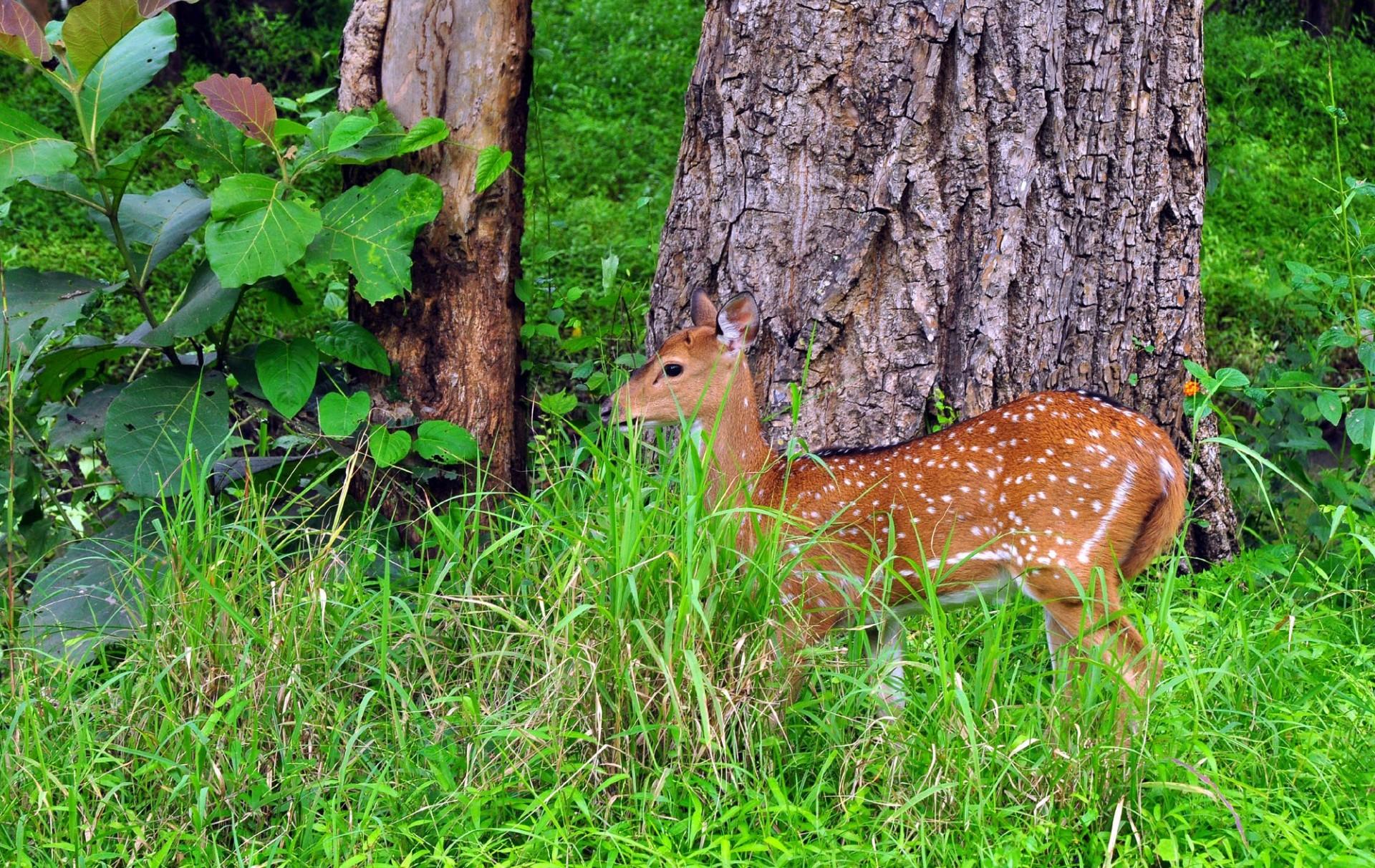 Santuario de vida silvestre Parambikulam