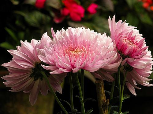 Blossom Parque