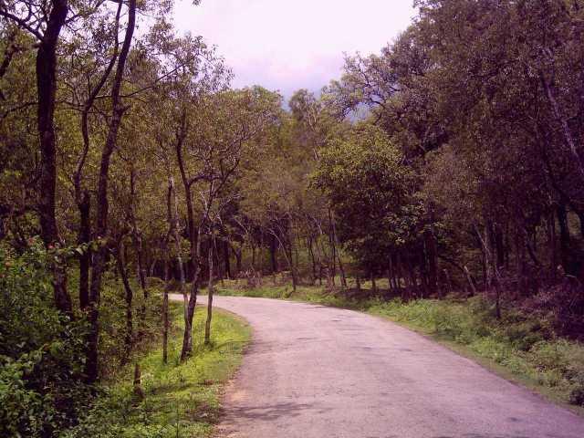 Marayoor los bosques de sándalo