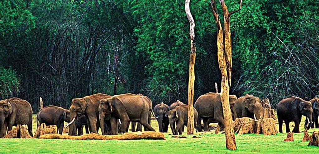 Parques Nacionales de Vida Silvestre Kerala
