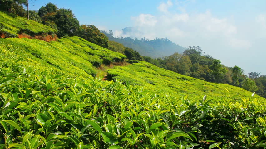 Plantaciones de té Munnar