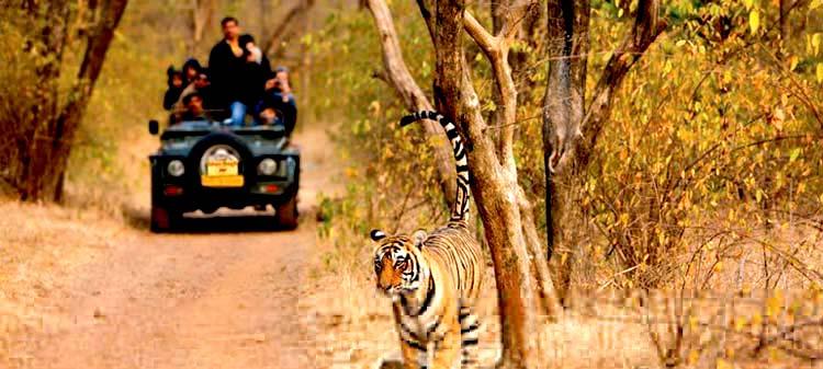ranthambhore-national-park.jpg