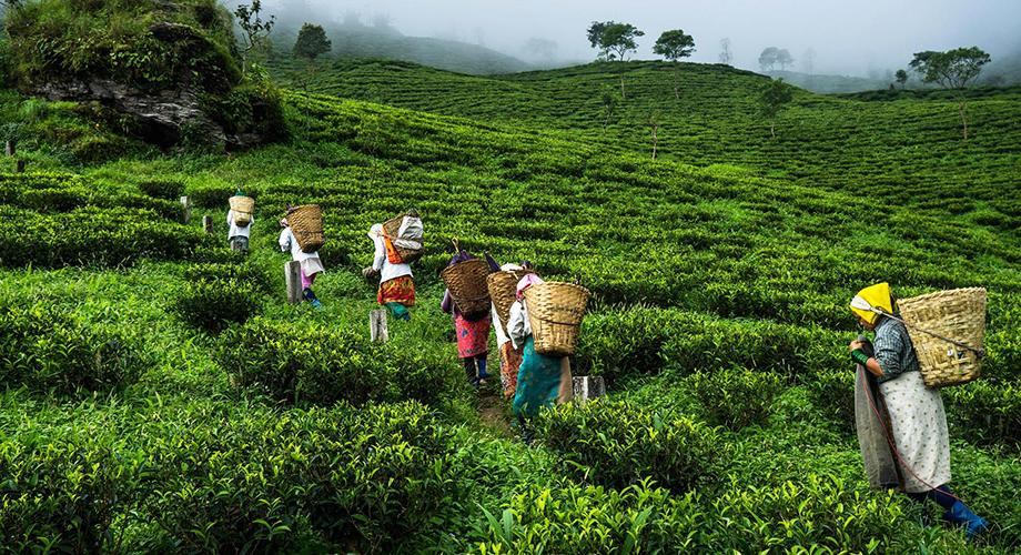 kerala-tea-slider-1.jpg